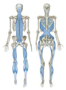 【腰痛】慢性の腰痛が草香江の整体で改善(^^)←福岡市中央区大濠の患者さま