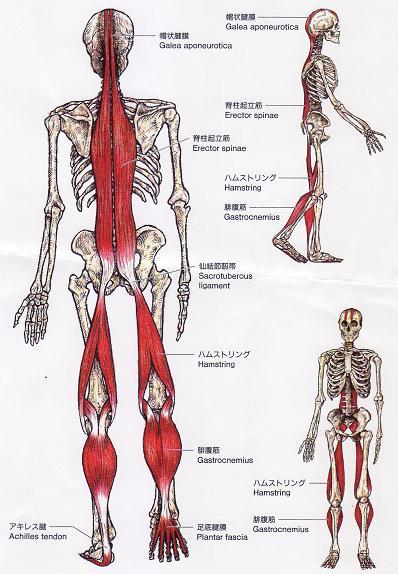 【腰痛の症例】・・・福岡市中央区草香江の整体