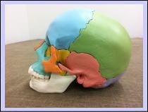 【頭痛・偏頭痛-首こり-肩こり-整体】・・・福岡市城南区荒江の患者さま