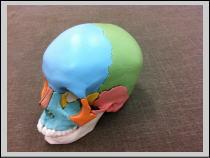 【福岡市-中央区-整体】・・・頭痛、頭が辛い/赤坂の患者さま。