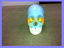 福岡市早良区西新の患者さん・・・福岡整体/頭痛・肩こり・首こり・坐骨神経痛・オスグッド
